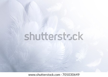 Airy soft fluffy  wing  bird with white feathers close-up of macro pastel blue shades on white background. Abstract gentle natural background with bird feathers macro with soft focus. #705030649