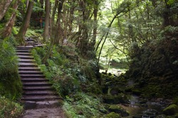 Akame 48 Waterfalls: Mysterious hiking trail with rock steps and a handrail through giant trees, untouched nature, foliage and lush vegetation leading to cascading waterfalls in rural Japan