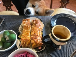 Akita breed dog looks at the table with a meat pie with lust