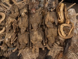 Akodessewa Voodoo Fetish market - corpse of dead bats and other animals. Togo, Africa.