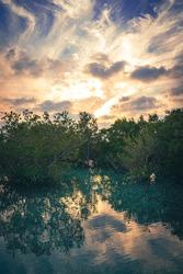 Al Jubail Mangrove Park. Abu Dhabi. United Arab Emirates