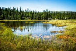 Alaska wildlife landscape with endless forests and waters