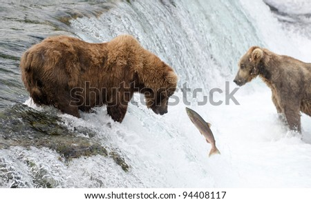 Alaskan brown bear fishing for salmon at Brooks Falls in Katmai National Park