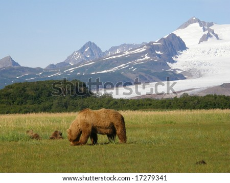 Alaskan brown bears, katmai