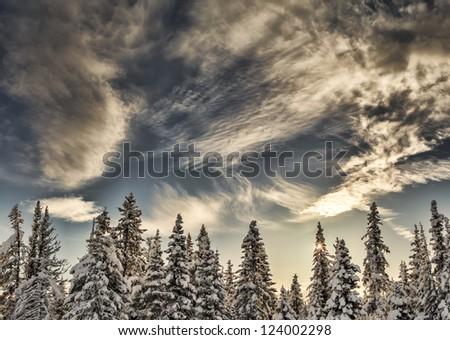 Alaskan snow covered spruce trees with interesting clouds and a small sunburst.