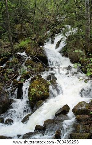 Alaskan Wilderness #700485253