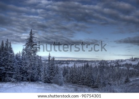 Alaskan winter scene with spruce trees, snow, and moody clouds. - stock photo