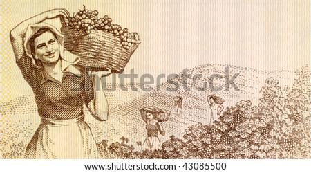 ALBANIA - CIRCA 1976: Woman harvesting grapes on 3 leke 1976 banknote from Albania.