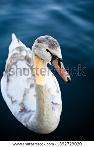 Albatross Seabird Bird Duck Photo #1392729020