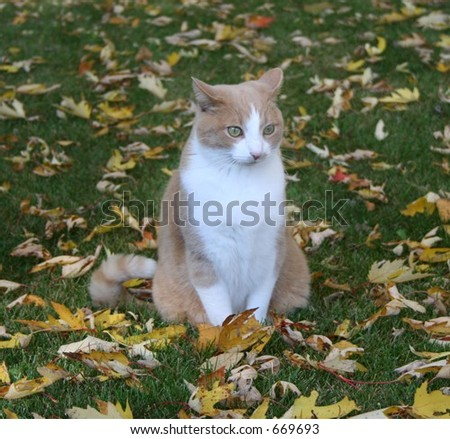 Alert Cat on a Fall Day