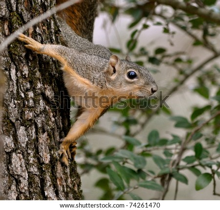 Alert squirrel clinging to tree