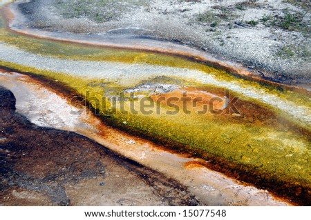 Algae and bacteria formations in flowing stream