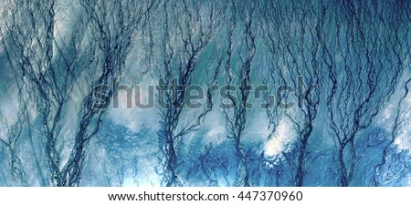 algae desert,Stone plant fantasy, Photographs magic, just to crazy, artistic, abstract, from the deserts of Africa from the air, landscapes of your mind, optical illusions,flowers, blue, water,