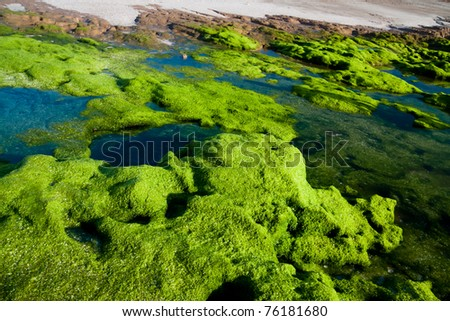 Algae on the seaside
