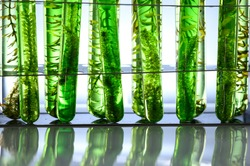 algae research in laboratories, biotechnology science concept