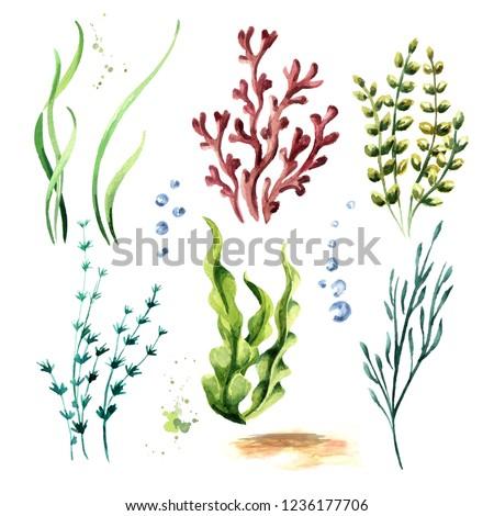 Algae set. Watercolor hand drawn illustration, isolated on white background Сток-фото ©