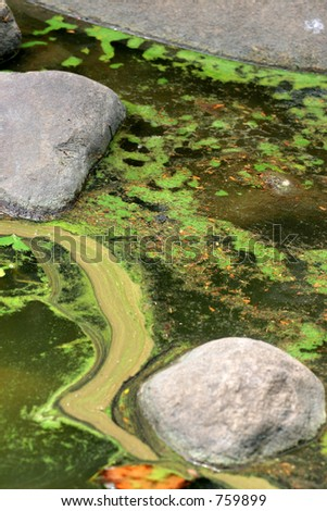 Algal slurry at the top of a stagnant pond forming swirl and bloom patterns
