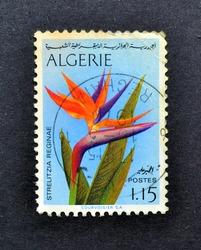 Algeria - circa 1974 : Cancelled postage stamp printed by Algeria, that shows Bird of paradise (Strelitzia reginae), circa 1974.