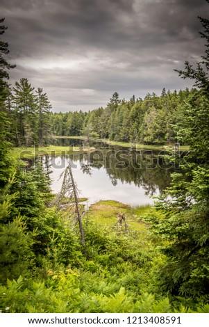 Algonquin Park pond #1213408591