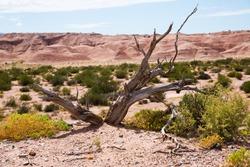 Alien looking landscape of barren lands in La Rioja Province in Argentina