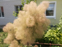 Alien tree stuck on the plot and surprises with its unusual beauty