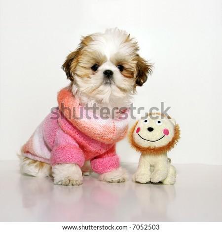 My Dog, Kitsi and Friends