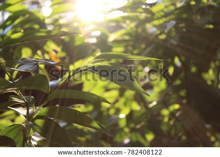 all green leaf #782408122