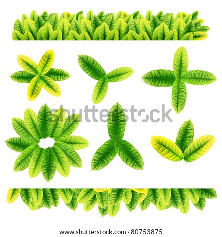 All sorts of green leaves from trees and shrubs isolated on white background for design work