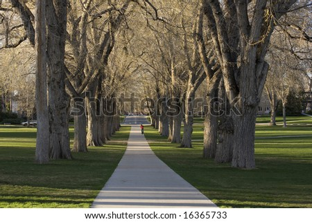 Alleey with old American elm trees - the Oval at Colorado State University campus in early spring