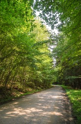 Allegany State Park's dirt road