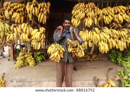 ALLEPPEY, INDIA -NOV 06: An unidentified banana seller holds two bunches of plantain at a vegetable market on November 06, 2011 in Alleppey, Kerala, India. Plantain is the most popular fruit in the state of Kerala.