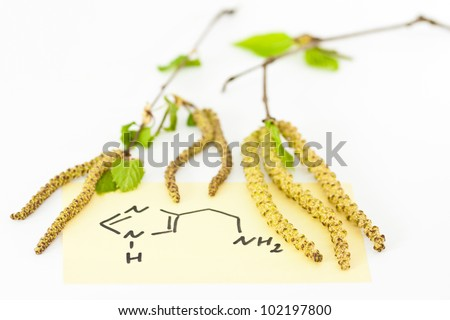 Allergic rhinitis with birch blossom
