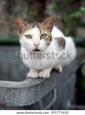 Alley Cat sat on a rubbish bin with a surprised look on its face