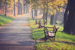 Alley in colorful autumn park with three benches