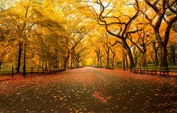 Alley in the autumn city. City park alley in autumn. Autumn city park alley. Alley in autumn fall