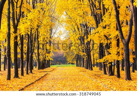 Alley in the bright autumn park - stock photo