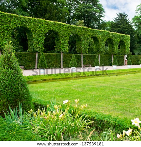 Alley lawn and hedge in a summer park