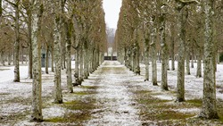 Alley of lime trees in a public park in France. Perfect alignment forming a corridor. Symmetrical photo. Trunks and bare branches on a cold winter morning. Snow on the ground. White, snowy sky.