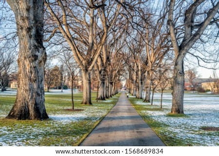 alley of old American elm trees in late fall scenery - historical Oval of Colorado State University campus - landmark of Fort Collins Photo stock ©
