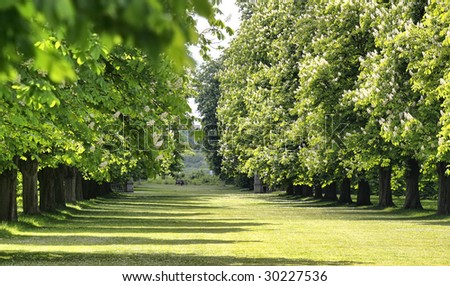 Alley of trees in an English garden