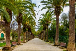 Alley way in the park among the palm trees, Garden Ibleo in Ragusa, Sicily, Italy