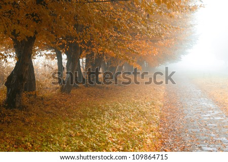 alleyway in foggy park. Autumn, rainy weather