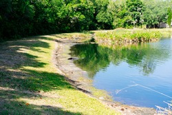 Alligator is hiding in water