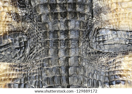 Alligator Skin Texture For Background