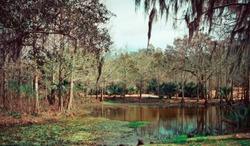 Alligators in Swamp Wetland Close Up in Wild