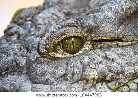 Alligators resting On The Sand - stock photo
