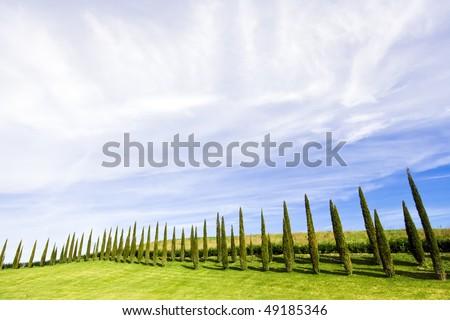 stock-photo-alligned-beatiful-green-cypress-trees-under-blue-sky-in-chianti-tuscany-italy-49185346.jpg