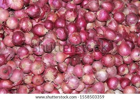 Allium cepa, red colour onion. #1558503359
