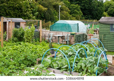 Allotment plots growing a variety of vegetables