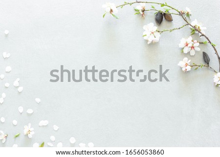 Almond flowers with three almonds in the upper right corner and randomly dispersed white petals covering the lower left corner on a gray background with empty space to edit